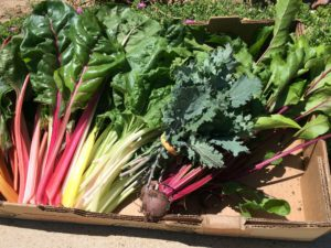 cardboard box of red and green stalks of swiss chard and some beets with stems.